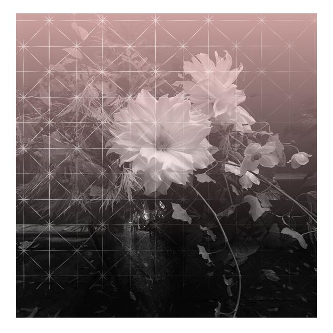 cover-seasonal-blossoming-scorp